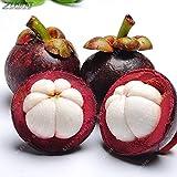 トロピックの10個入りパープルタイマンゴスチン種子盆栽天然の抗女王