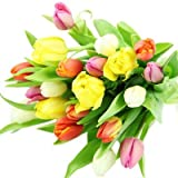 20 frische bunte Tulpen