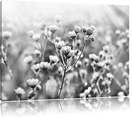 Pixxprint Romantische Blumenwiese / 100x70cm Leinwandbild bespannt auf Holzrahmen/Wandbild Kunstdruck Dekoration