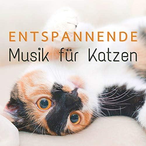 Cat Whisper