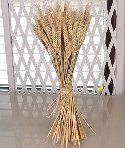 takestop SPIGHE di Grano Fascio 80 Pezzi Colore Naturale Fiori Artificiali H92cm Decorazione ADDOBBI CASA Composizione Floreale