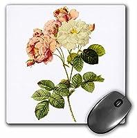 3drose LLC LLC 8x 8x 0.25インチマウスパッド、Redouteヴィンテージ水彩花柄ダマスクバラRosa Damascena Celsiana (MP 106764_ 1)