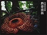 熱帯雨林―水越武写真集