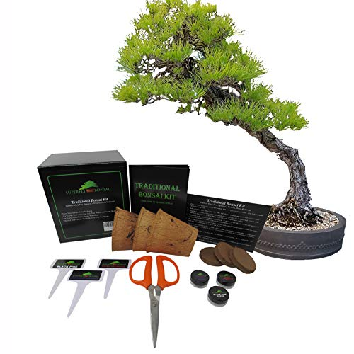 Traditional Bonsai Seed Growing Kit - Japanese Wisteria, Japanese Black Pine, Dawn Redwood (Level 1)