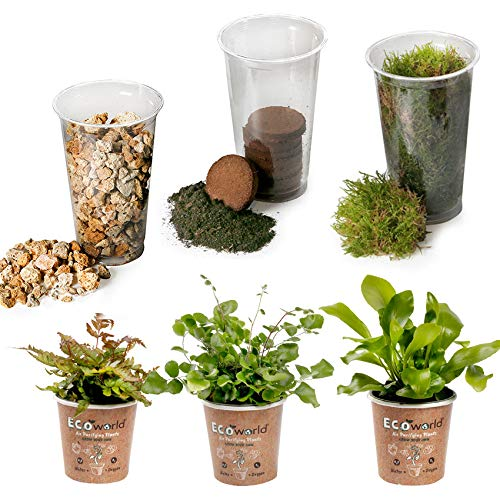 Ecoworld Jungle DIY Ecosystem Set - 3 Farne - Substrat - Boden - Moos