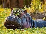 Nilpferde 2020, Wandkalender im Querformat (45x33 cm) - Tierkalender Flusspferde mit Monatskalendarium - Ackermann Kunstverlag