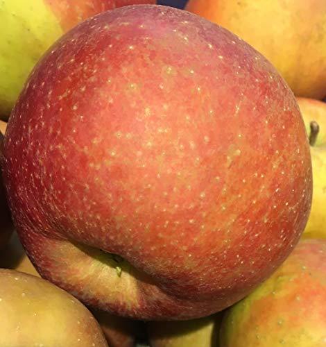 ' Roter Boskoop ' - Bodensee-Apfel vom Rosenhäusle