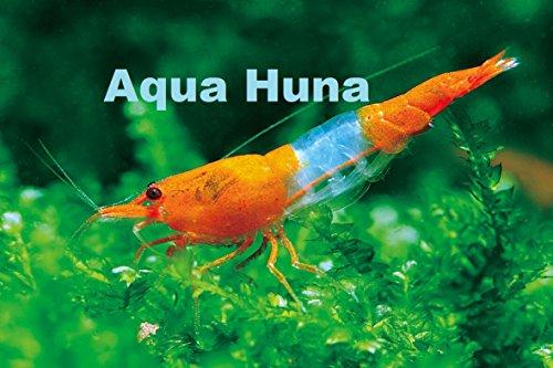 Aqua Huna Orange Rili Shrimp - 6 Pack