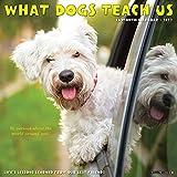 What Dogs Teach Us 2022 Wall Calendar