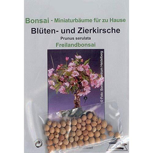Tropica - Bonsai - Blüten- und Zierkirsche (Prunus serulata) - 30 Samen
