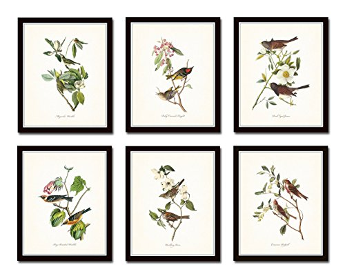 Audubon Birds Print Set No.1 Set of 6 Vintage Bird Prints Home Decor Wall Art - Unframed