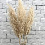 5pcs naturel Reed fleurs séchées Herbe Pampas Cérémonie de mariage de bouquet de fleurs Décoration moderne Décoration (Color : 5pcs)