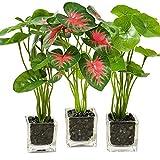 Aisamco Set di 3 Piante Artificiali Faux da Tavolo Verde con vasi in Vetro Trasparente Piante di Seta in Vaso di Vetro Pianta Finta Piante in Vaso per la Decorazione Domestica