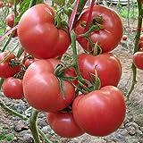 Quantité: 50 pcs Temps de germination: 15-25 jours. Pour la température de germination: 18-25 Celsius. Le climat, la température, le sol et les méthodes de culture varient considérablement selon les régions. Veuillez choisir la plantation en fonction...