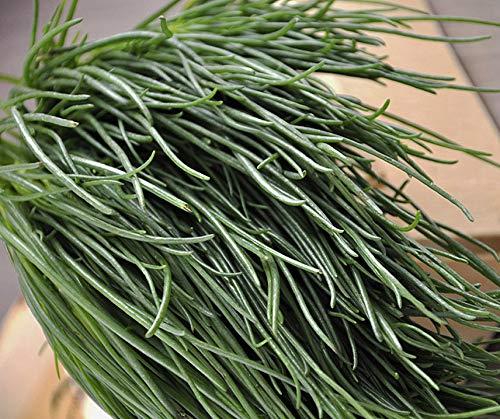 Bobby-Seeds Kräutersamen Salzkraut-Okahijiki Portion