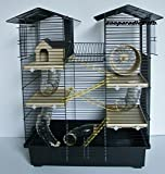 Kekahi hamster mea paʻa, koena rodent, koena CH2 i loko o ka mea ʻeleʻele / beige Kaʻai ʻai ʻai