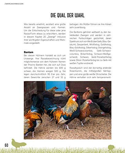 Zwerghühner: Ideale Tiere für jeden Garten - 10