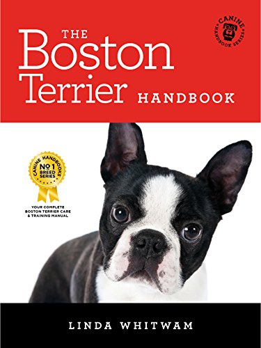 Best Dog Training Boston