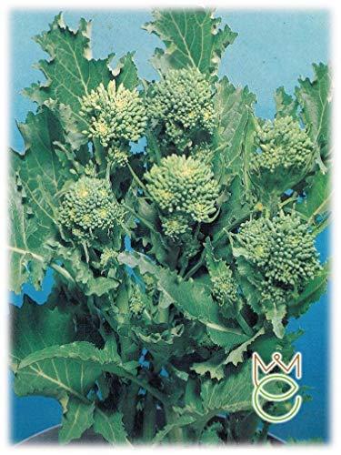 Cima di Rapa Novantina Brassica rapa Samen Samen Gemüse Gemüsegarten