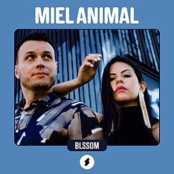 Shock Sessions: Miel Animal