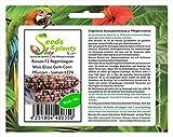 Stk - 40x Riesen F1 Regenbogen Mais Glass Gem Corn Pflanzen - Samen #274 - Seeds Plants Shop Samenbank Pfullingen Patrik Ipsa