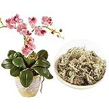 DASNTERED Substrati di Erba secca di Muschio, 6L 12L Forniture da Giardino di Muschio di sfagno Durevole per Fertilizzante Organico per Orchidee