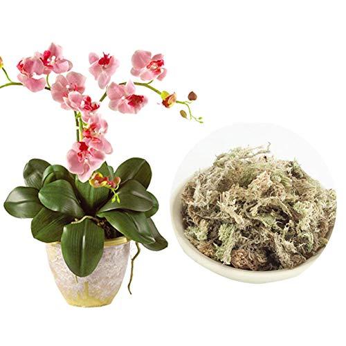 Urstory1 Sphagnum Moss 6L 12L Moisturizing Flower Plants Durable Garden Supplies Home Practical Flowerpot Nutrition Phalaenopsis Organic For Orchid Florist(12L)