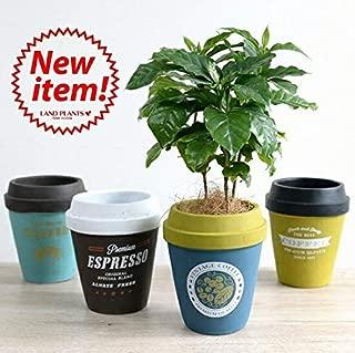 LAND PLANTS コーヒーの木 コーヒーカップ型 陶器鉢 Mサイズ【ネイビー×オリーブ】