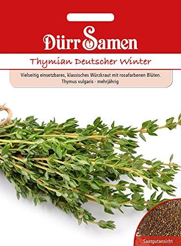 Thymian deutscher Winter | Thymiansamen von Dürr-Samen