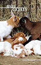 Baby Goats Weekly Planner 2017: 16 Month Calendar by David Mann (2016-10-05)