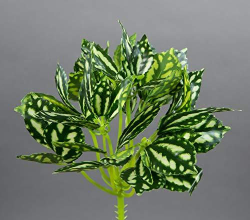 Seidenblumen Roß Zebrapflanze 22cm grün-weiß ZF Kunstpflanzen künstliche Pflanzen