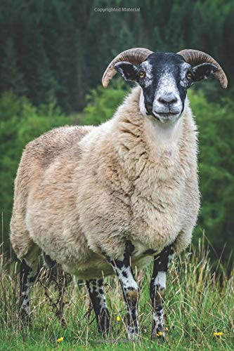 SCOTTISH BLACKFACE SHEEP IN KINTYRE: 6 x 9 Inch Blank Lined Journal For Sheep Breeders, Farmers and Nature Lovers