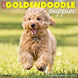 Just Goldendoodle Puppies 2022 Wall Calendar (Dog Breed)