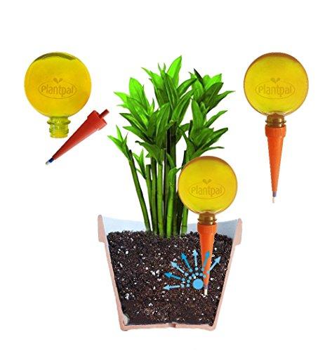 Plantpal Pack van 3 Grote Watering Globes. Nieuwe heldere kleuren blauw, groen en oranje, helder zicht op waterniveau. Vakantie en dagelijks zelf water geven voor planten. ORANJE