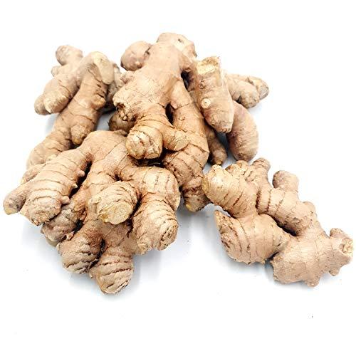 Ingwer Bio 300 g: Ingwerknollen frisch aus Peru oder Brasilien | frische Ingwerwurzeln | Herstellung Ingwer Shots, eingelegter Ingwer | frischer Ingwer ungezuckert | Ingwer frisch | Fresh Ginger