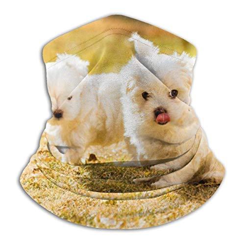 Bklzzjc Netter weißer maltesischer Hund im Gras Kopfbedeckung Halsmanschette Wärmer Winter Skiröhrchen Schal Schal Fleece Gesichtsbedeckung