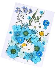 Daimay 35 PCS Flores Secas Naturales Flores prensadas Reales múltiples mezcladas Surtido Colorido para Resina DIY Joyas Nail Art Decoraciones Florales - Estilo Nuevo C