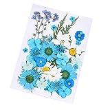 Daimay 35 PCS Flores Secas Naturales Flores prensadas Reales múltiples mezcladas Surtido ...