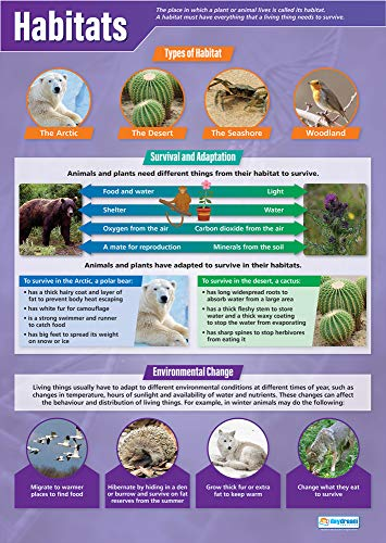 """Habitats  Science Posters  Gloss Paper Measuring 33"""" x 235""""  STEM Charts for The Classroom  Education Charts by Daydream Education"""