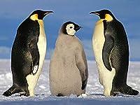 木製のパズル1000ピース、ペンギン、家庭の装飾に適しています。青少年の誕生日プレゼントです。Puzzle (50×75 CM)