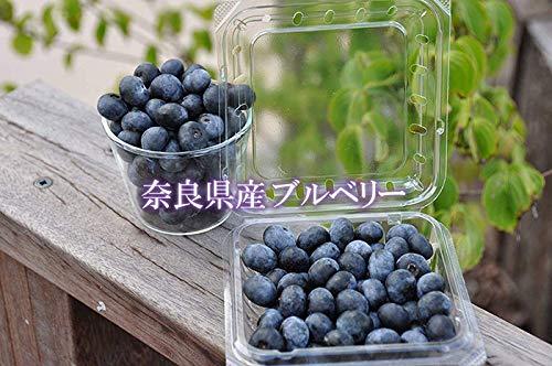 冷凍ブルーベリー100g×5P堀内果実園無農薬栽培安心安全