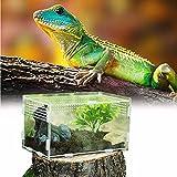 Caja de Alimentación de Insectos, 20X12X12cm Acrílico Transparente Estuche de Cría de Reptiles...