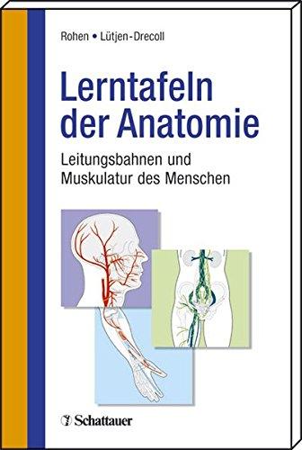 Lerntafeln der Anatomie: Leitungsbahnen und Muskulatur des Menschen