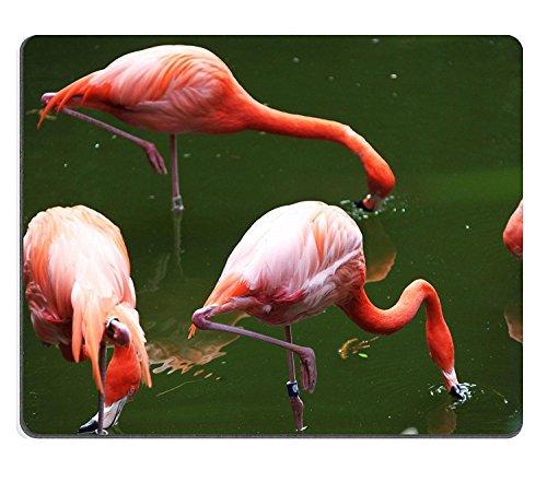 Luxlady Gaming Mousepad IMAGE ID: 34774142 roze verenkleed flamingo op zoek naar voedsel in een vijver