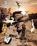 Yoga Dogs - Canyon Tiere Hunde Sport Mini Poster Plakat