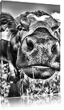 Pixxprint Alpen Kuh auf Bergwiese als Leinwandbild | Größe: 120x80 cm | Wandbild| Kunstdruck | fertig bespannt