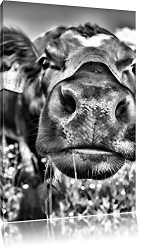 Pixxprint Alpen Kuh auf Bergwiese als Leinwandbild | Größe: 80x60 | Wandbild| Kunstdruck | fertig bespannt