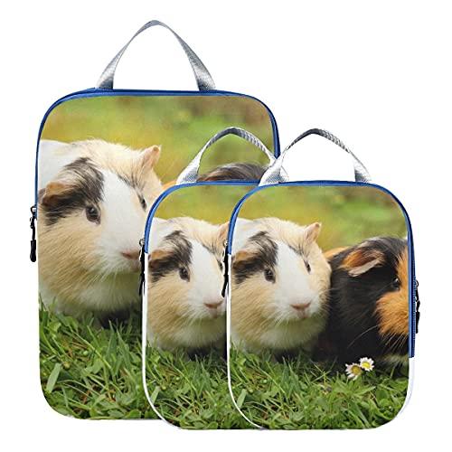 Lot de 3 sachets de compression Kawaii mignons cochons d'Inde, organiseurs de voyage extensibles pour bagage à main, voyage