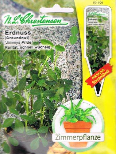 Erdnuss Jimmys Pride Arachis hypogaea Zimmerpflanze Rarität