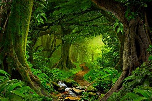 Tropical Jungle Rainforest Footpath Landscape Photo Photograph Cubicle Locker Mini Art Poster 12x8